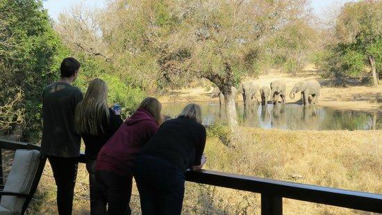 Serondella Game Lodge: Uitzicht op de drinkplaats vanaf het terras.