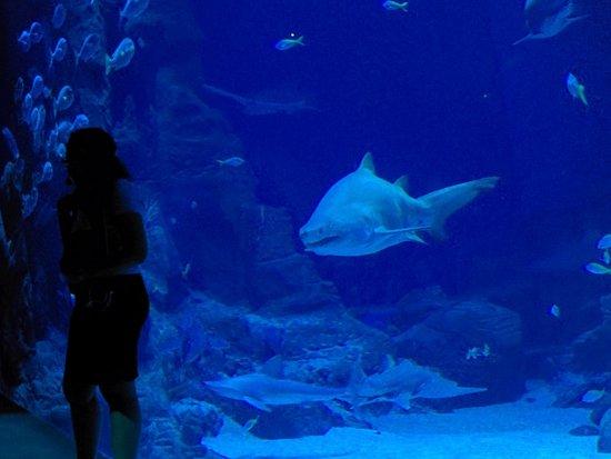 Aquarium Mare Nostrum : l'animation des requins