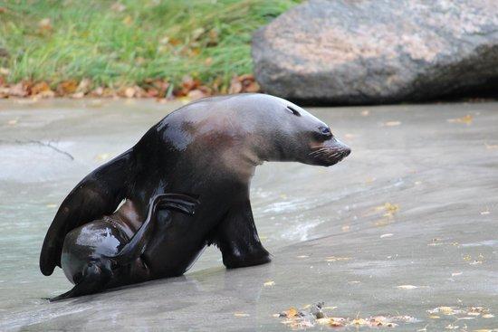 Augsburg Zoo: Für Fisch tue ich alles ;-)
