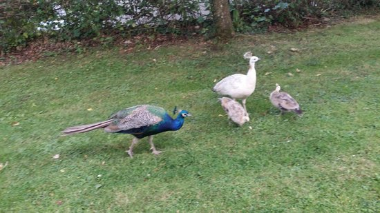 Woodford Bridge Country Club: Peacock family