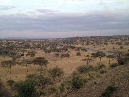 Tarangire Safari Lodge: La vista dalla terrazza del resort