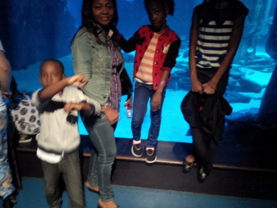 Sea Life London Aquarium: My wife, Chimezie, and daughters diving into Sea Life, London