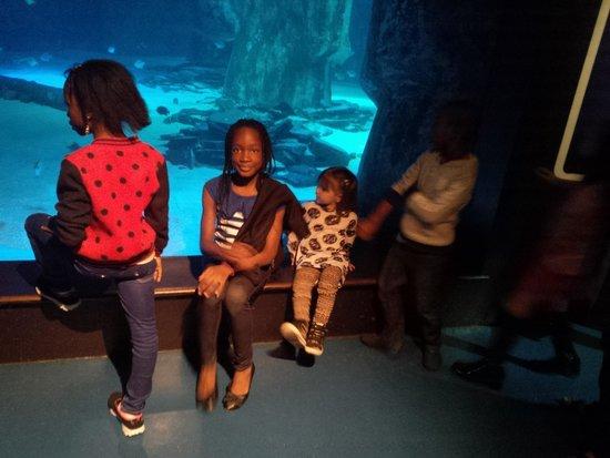 Sea Life London Aquarium: My family enjoying the multicultural environment of the SeaLife in London