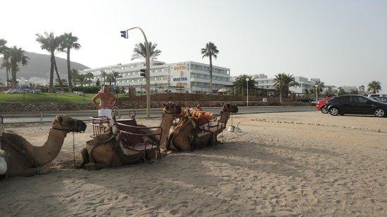 Servigroup Marina Playa: вид на отель с пляжа