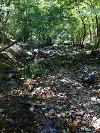Lake Catherine State Park: Awesome little creek we followed for quite a while. Scenery is absolutely amazing.