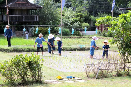 Siripanna Villa Resort & Spa: Family trying the rice planting activity at Panna Field