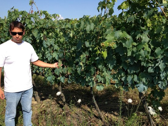 La Cipressina: The estate's vinyard, with a tour by the owner.