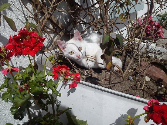 Ballaghaderreen, Irland: one of the cats having a lie down