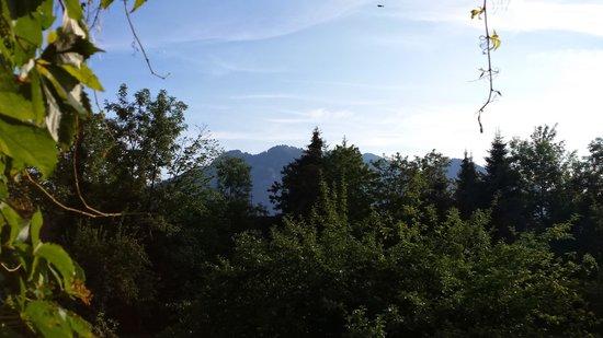 Gaestehaus Fellerhof: Blick aus dem Fenster 08 /2014