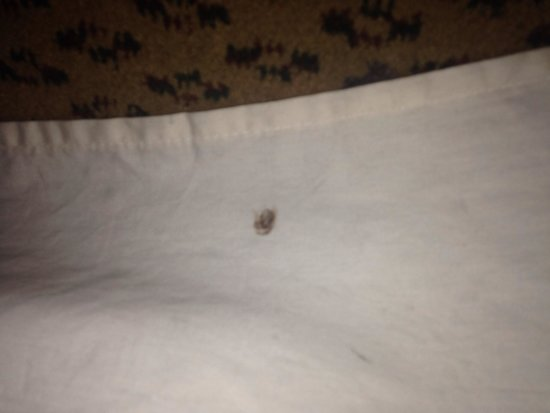 The Mayfair Hotel: Blood on the bed skirt