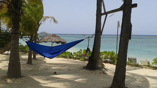 Coyaba Beach Resort: Hammock friendly property ~I love this place. Brought my own. 8/12/14