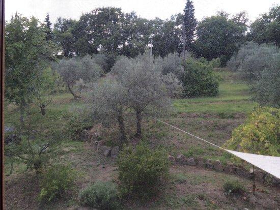 Agriturismo Il Castagnolino: dalla finestra