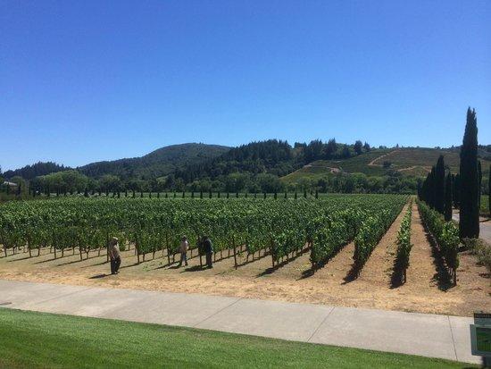 Ferrari-Carano Winery: The vineyards