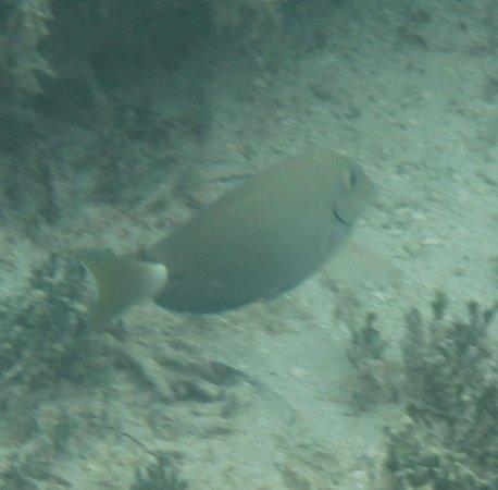 Eco-Snorkeling: Underwater scene