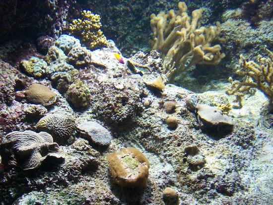 Aquarium La Rochelle : Quelques poissons, normal