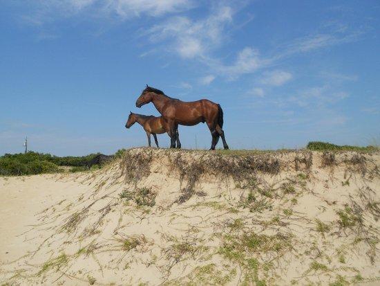 Wild Horse Adventure Tours: Wild Horses