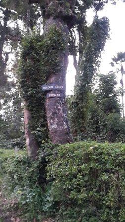Comfort Homestay- Spice Garden: Nellore Estate/ Spice Garden