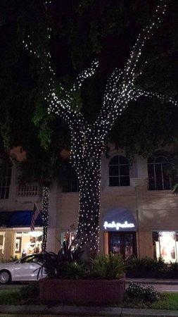 Las Olas Boulevard: Lights on trees