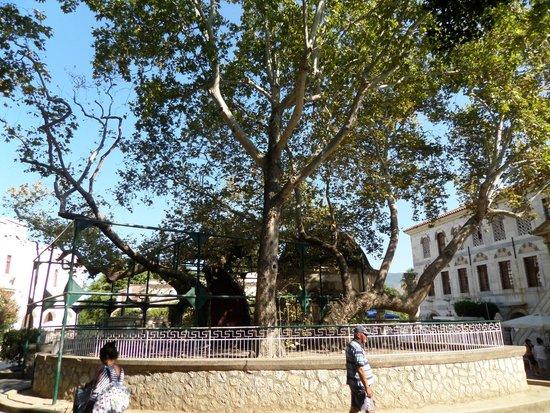 Hippocrates Tree: albero di Ippocrate