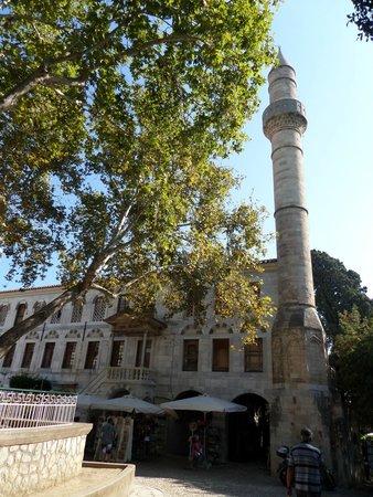 Hippocrates Tree: albero di Ippocrate 2