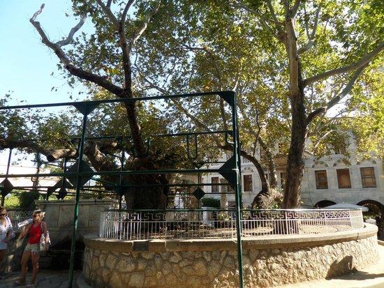 Hippocrates Tree: albero di Ippocrate 3