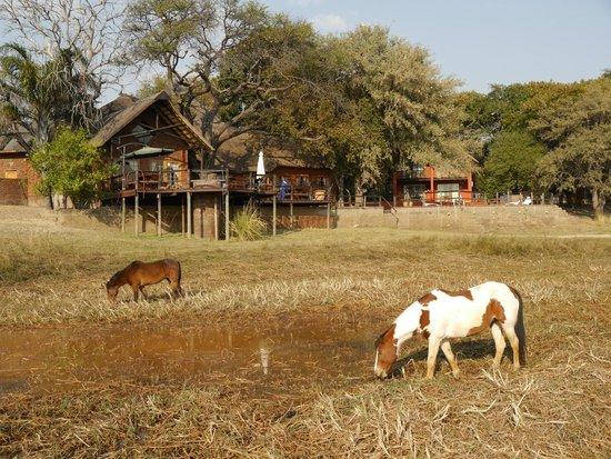 Kaisosi River Lodge: Blick von der Anlegestelle auf die Lodge