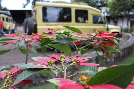 Twiga Lodge: Safari car & flowers