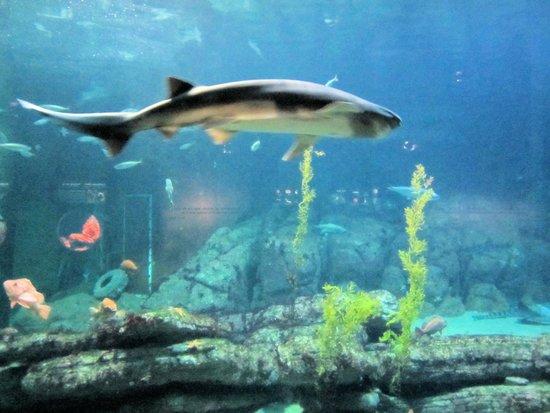 Wvr At Monterey Bay Aquarium Picture Of Monterey Bay