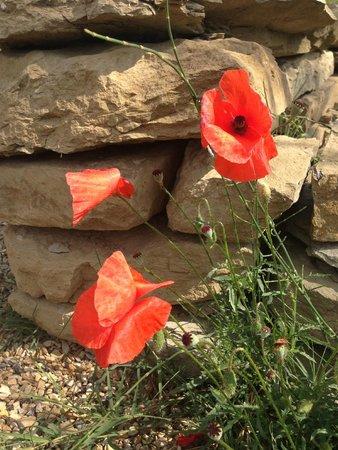 Casa Portagioia: rote Schönheiten, Mohnblumen im Garten