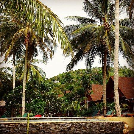 Green Papaya Resort : Les bungalows autour de la piscine