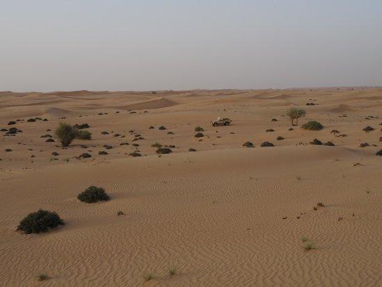 Platinum Heritage Luxury Tours and Safaris: Dubai Desert Conservation Reserve - Platinum Heritage Dinner Safari Tour