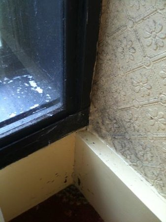 Best Western Ipswich Hotel: window filthy with grime and spider webs