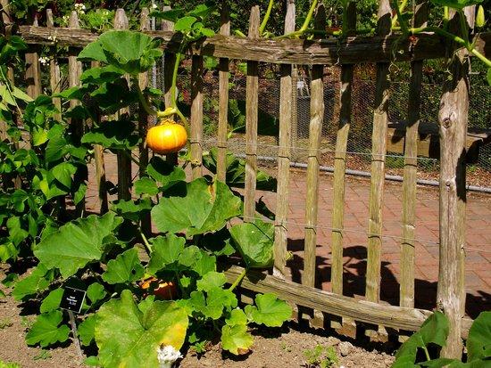 RHS Garden Rosemoor: In the vegetable garden