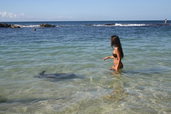 Paradise Cove Beach Oahu The Best Beaches In World