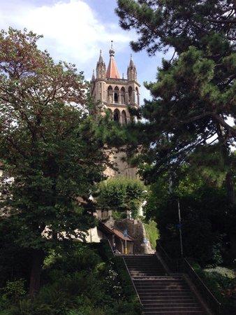 Kathedrale Notre-Dame: Сквозь листву