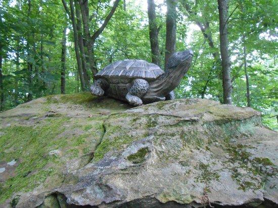 Salt Fork State Park: Turtle rock on bridle trail