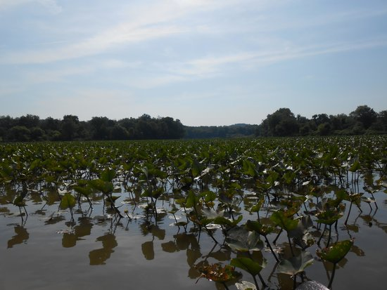 Salt Fork State Park: Canoeing on the south east lake area