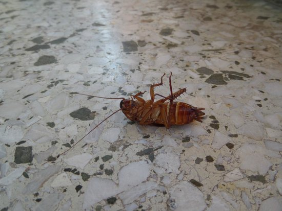 Jason Inn : Kakerlaken - jetzt schon am Balkon