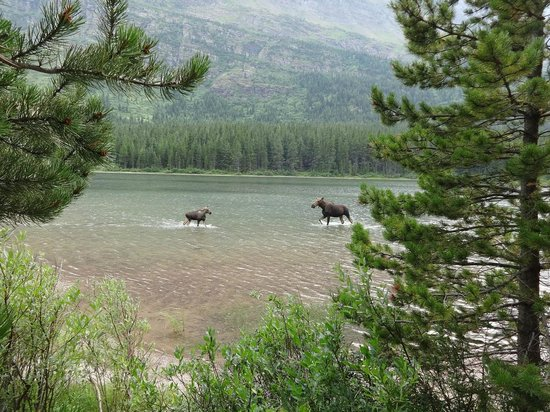 Fishercap Lake: Mother and calf coming together, so beautiful