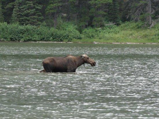 Fishercap Lake: Mother eating