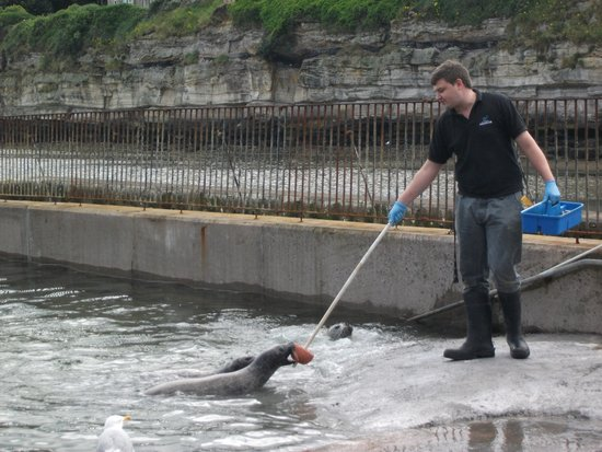 St Andrews Aquarium: feeding the seals