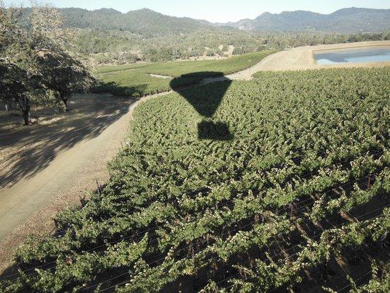 Napa Valley Aloft Balloon Rides: Pope Valley Vineyards
