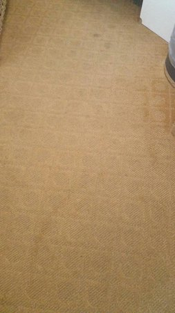 Sherry Frontenac Hotel: Dirty carpets