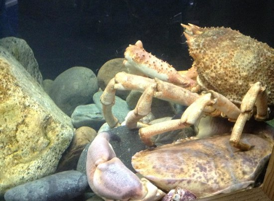 Sblash Caban Pysgod: You can even see Aberdaron crabs and lobsters