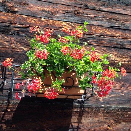 Rifugio Zum Gora : I nostri fiori