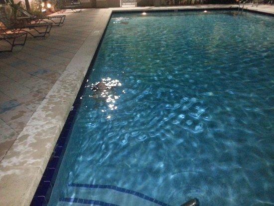 Hilton Garden Inn Miami Airport West: nice pool