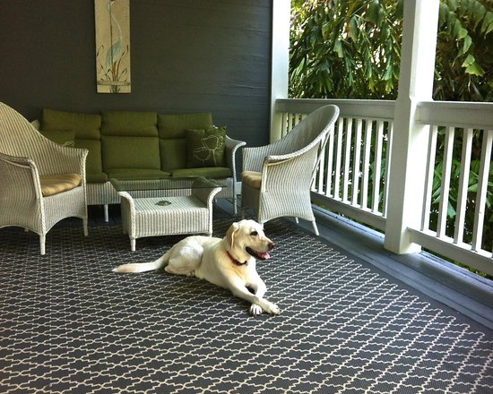 Ambrosia Key West Tropical Lodging: Our dog enjoying his favorite spot in the Keys.