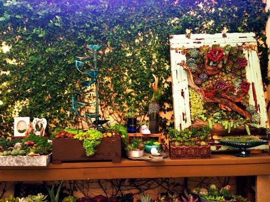 Succulent Cafe: Amazing place!