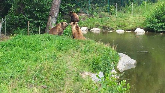 Wildpark Poing: ein Teil v Bärengehege