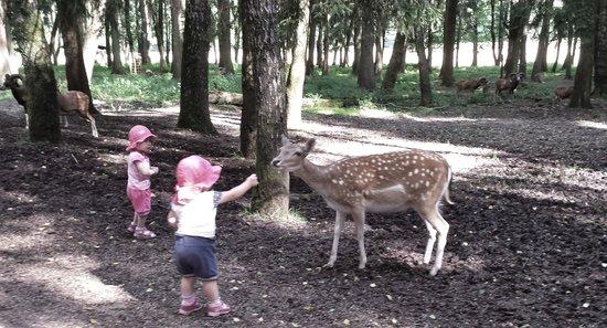 Wildpark Poing: eines von den Zwillingspärchen die dabei waren